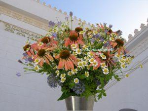 Arnika bloemen