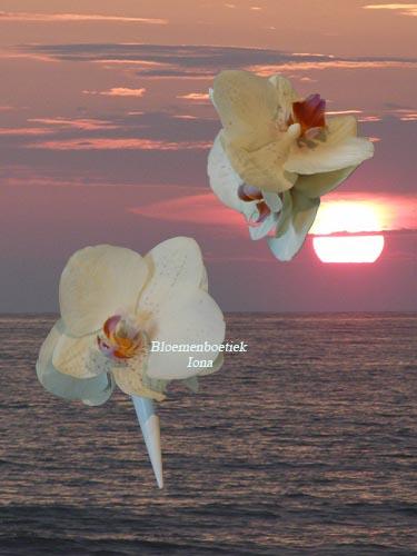 Orchidee corsage maakt bloemenboetiek Iona