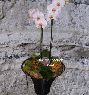 Gevlochten ijzeren mand met orchidee bestellen