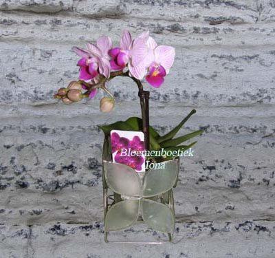 Theelicht met kleine orchidee / Bloemenboetiek Iona