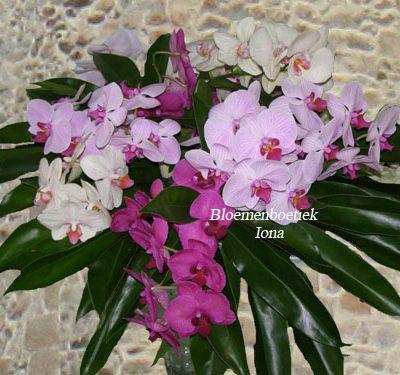 Orchideeën boeket bestellen Bloemendaal