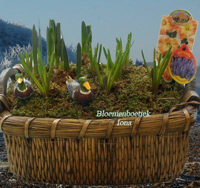Lentebloembollen kopen Haarlem