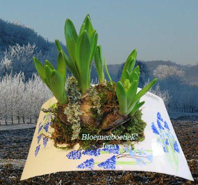 Prachtige schaal met bloembollen Bloemendaal
