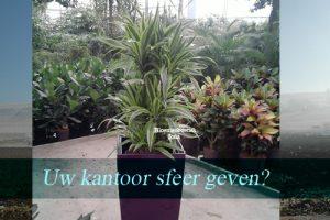 Planten voor bedrijven