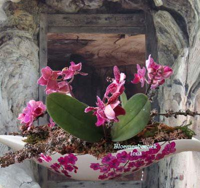 Schaal opgemaakt met Orchideeën bestellen Santpoort