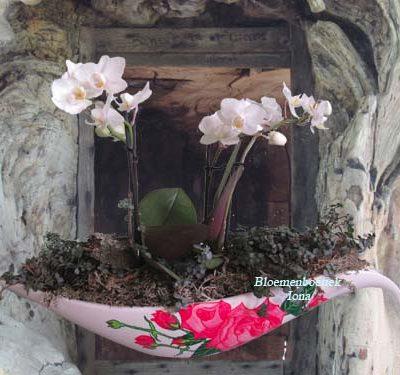 Witte Orchidee in schaal bestellen Bentveld