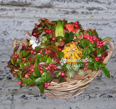 Herfst plantenmand/bestellen