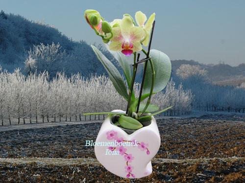 Hart met gele orchidee bestellen