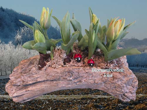 Stenen boomstronk met tulpen bestellen