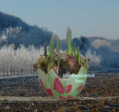 Tulpen bakje met tulpen