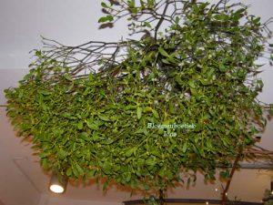 Mistletoe/bloemenboetiek Iona
